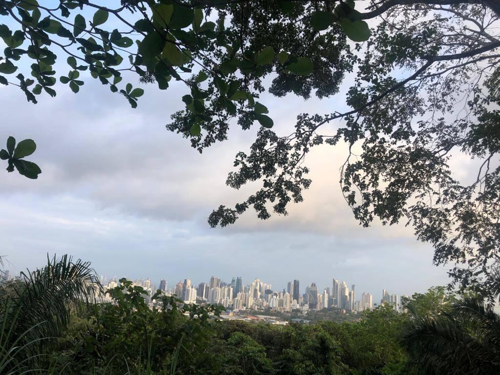vista desde cerro cedro parque metropolitano panama